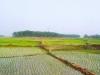 peddy-field-borendro-land-1
